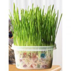 Goto - Cat grass seed set (DSA-7501) Grassseed-DSA7501