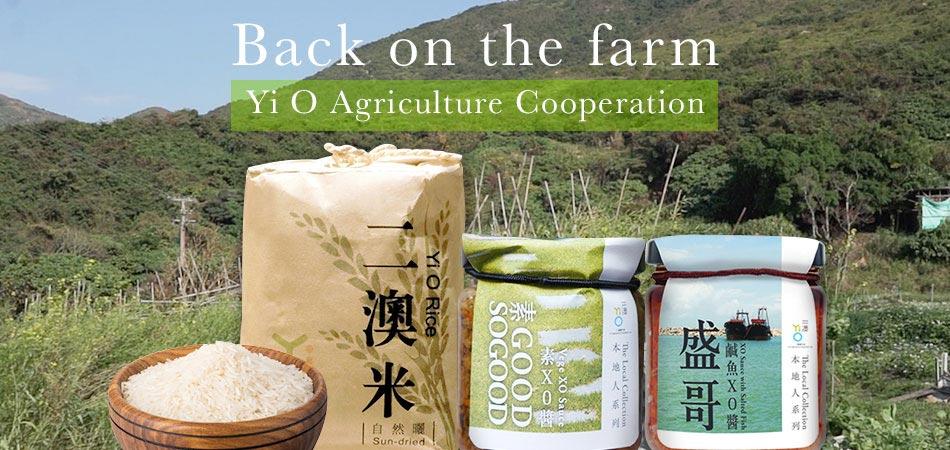 Resurgence of Yi O and Hong Kong rice